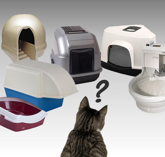 Welke kattenbak en welk kattengrit kan ik het beste kiezen for Welk behang kiezen